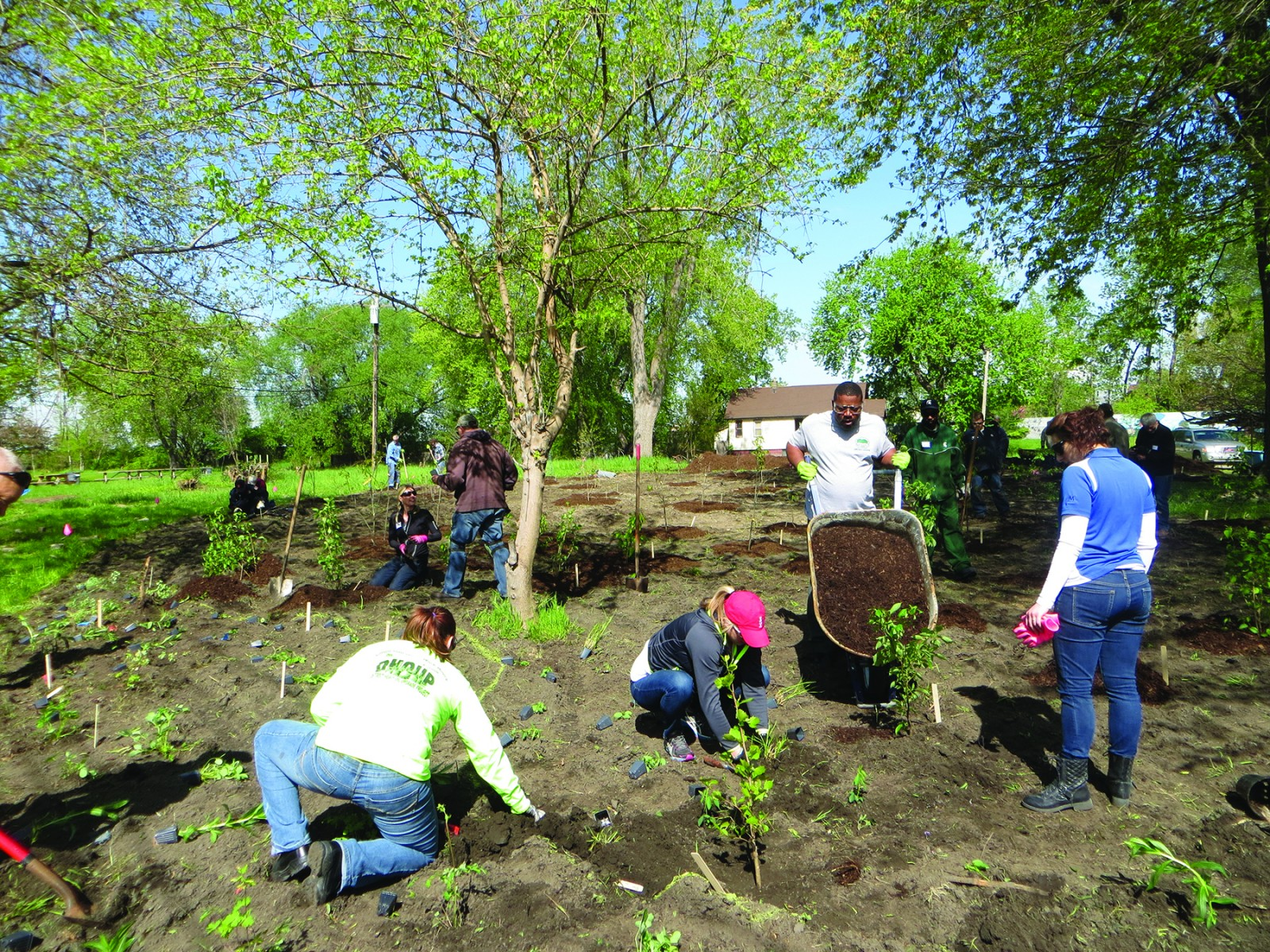 Volunteers joined forces to plant trees and plants in Oakwood Heights