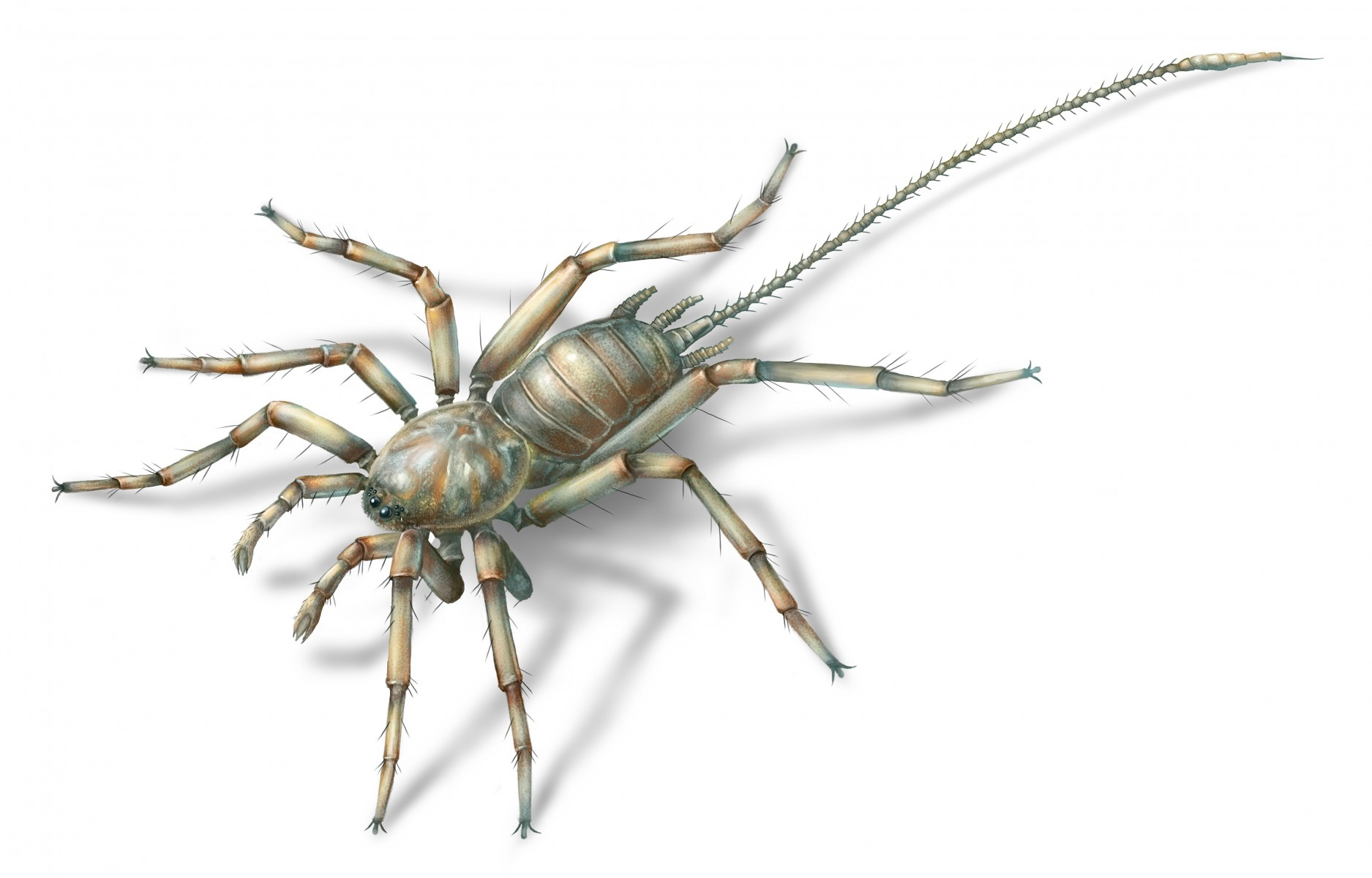 This ancient arachnid had a long, whippy tail