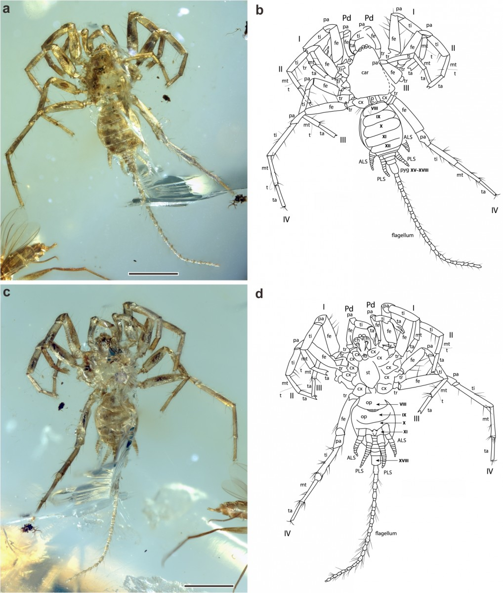 In Myanmar, Scientists Find an Ancient Spider With a Whip-Like Tail