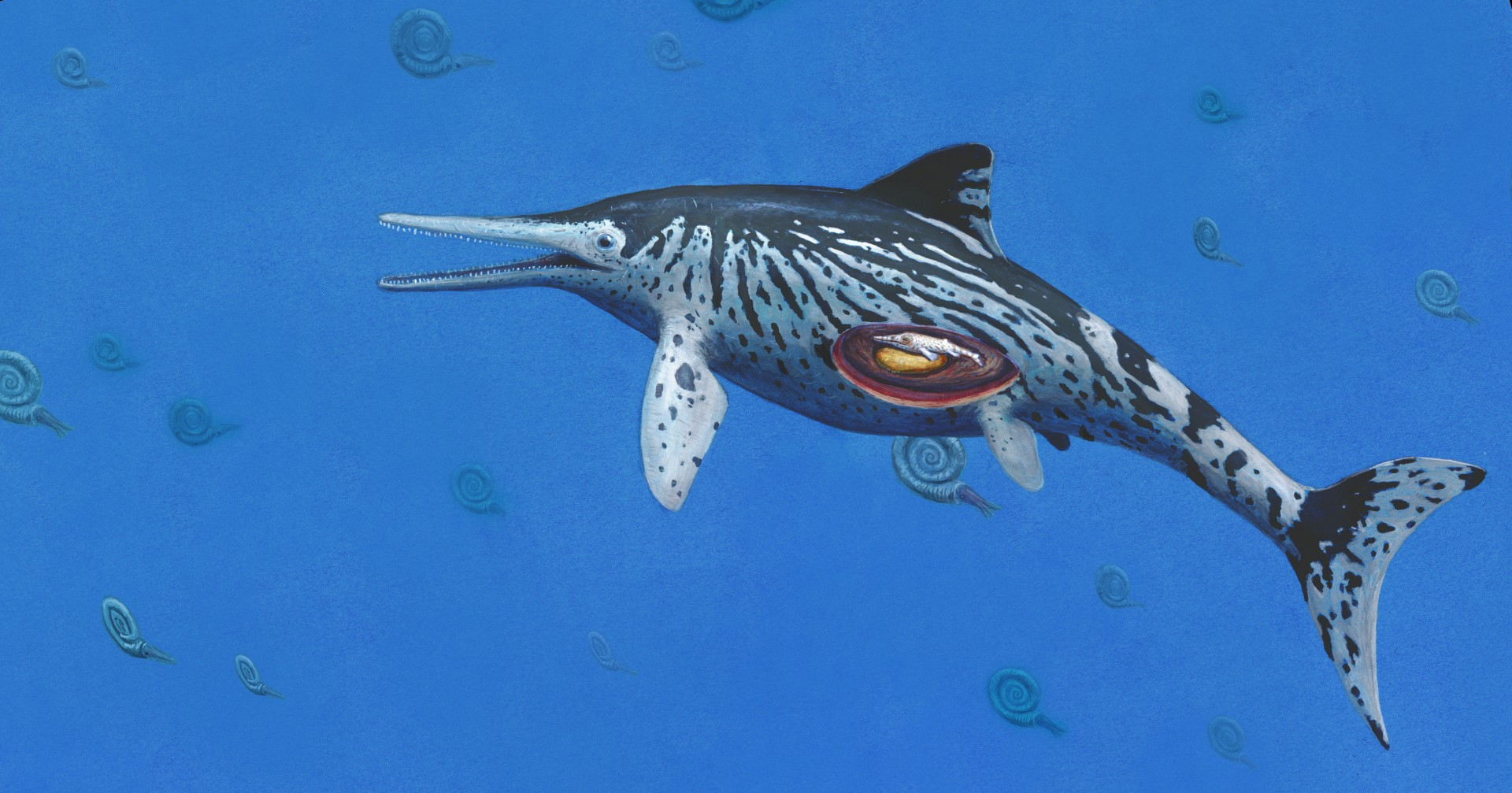 'Sea dragon' fossil is 'largest on record'