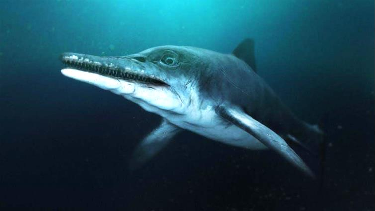 How the fossilised creature may have looked in its heyday. BBC Pictures