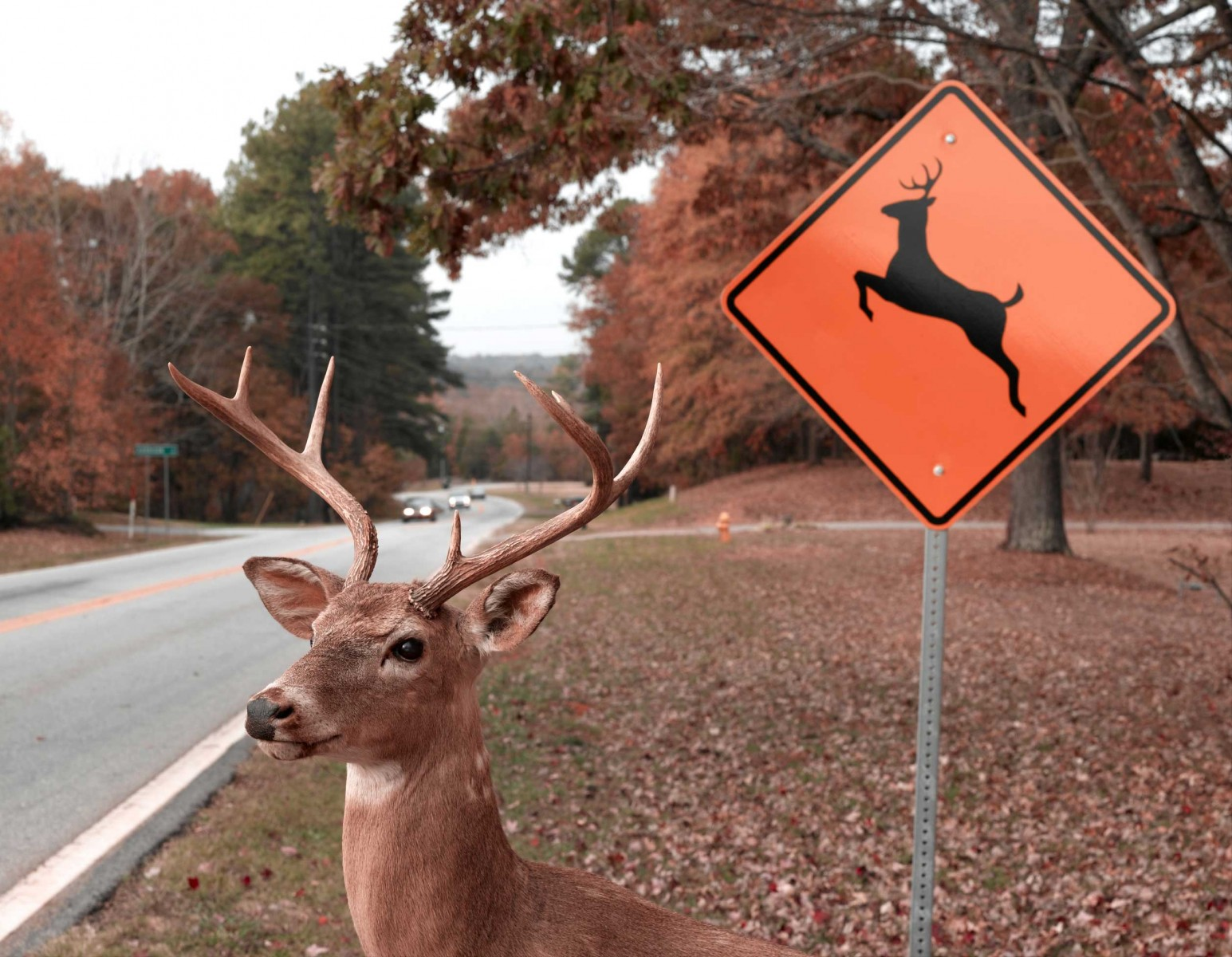 Avoid Car Deer Collisions With Defensive Driving Habits