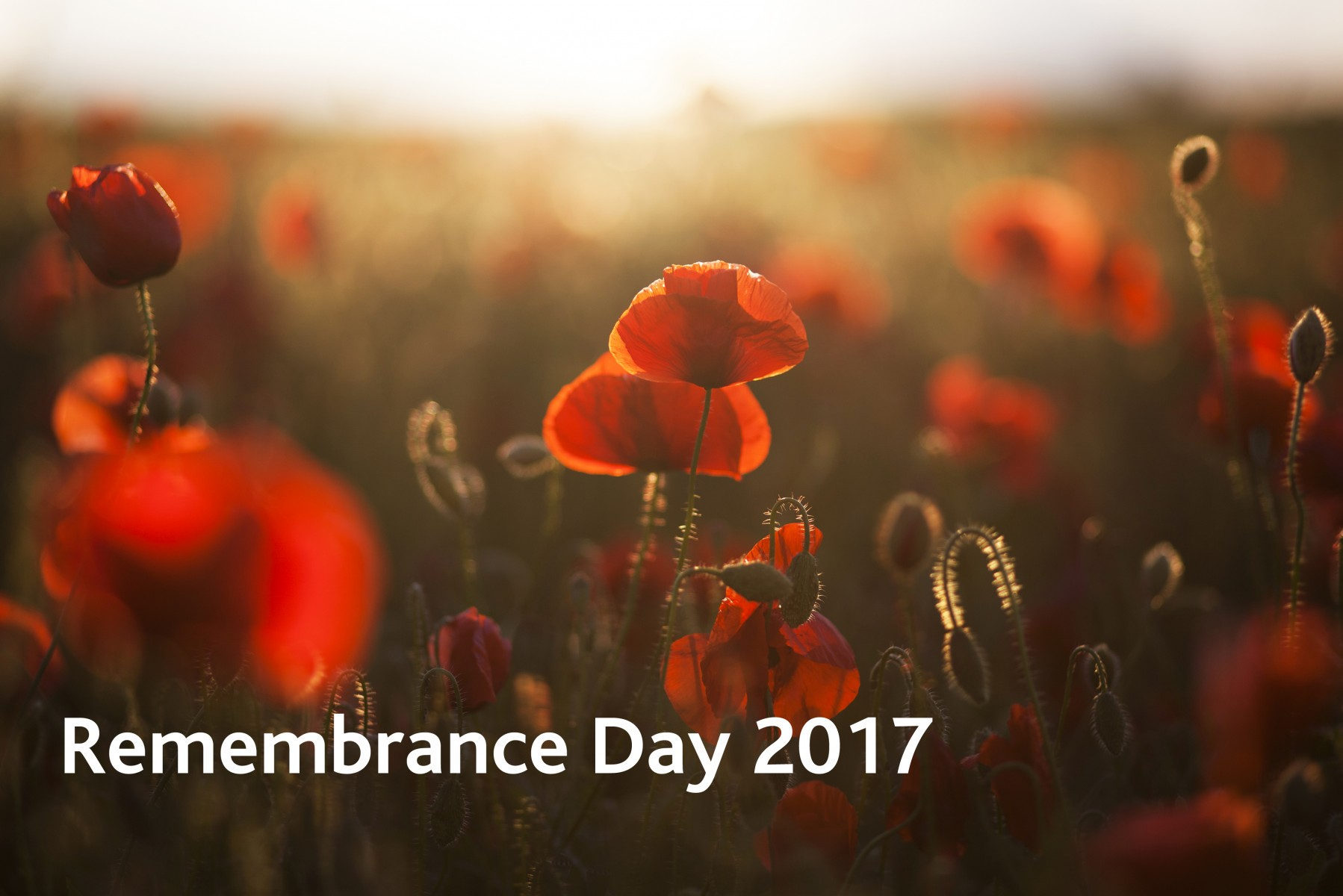 shutterstock_143922229 Remembrance17