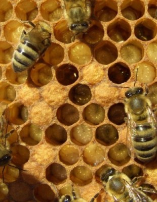 Life Inside The Hive
