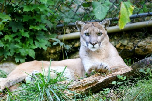 Takeover Tuesday at ZooAmerica: March 21, 2017