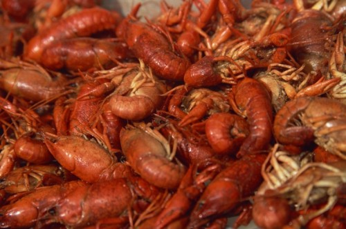 It's Crawfish Time … South Texas Country Style! image