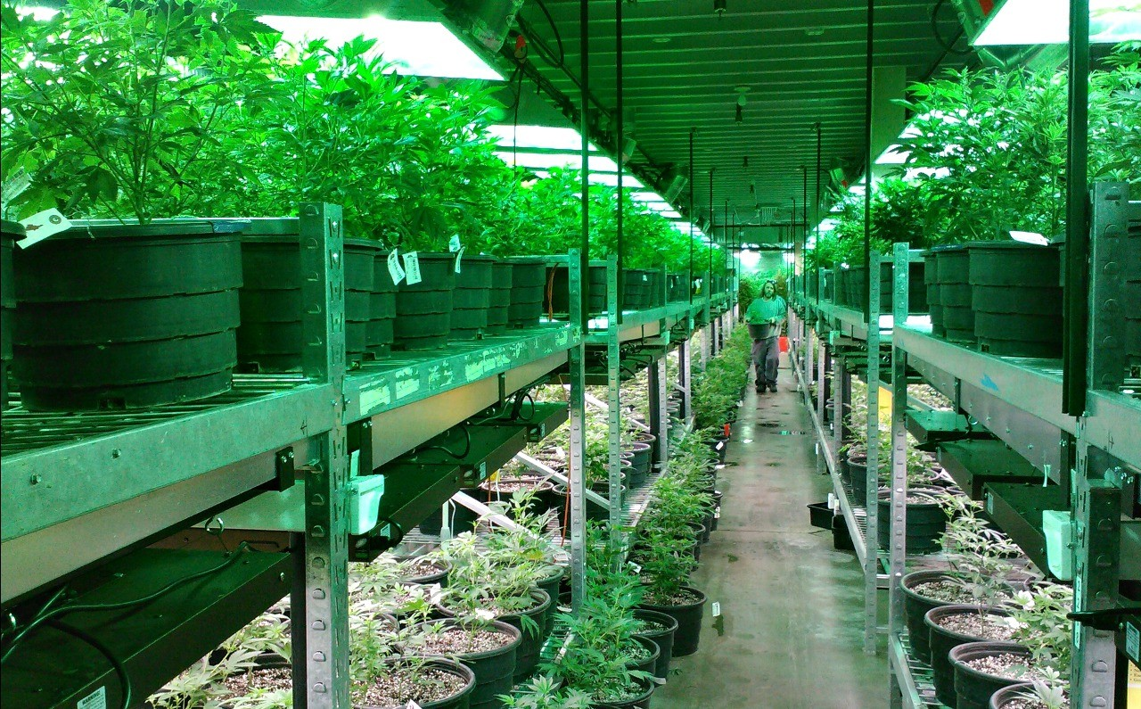 A worker tends marijuana plants in a commercial greenhouse in Colorado, which legalized the drug in 2014. Canada's soon-to-be-legal marijuana industry will likely create a crowded marketplace, says UAlberta retail expert Kyle Murray.