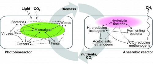 An EU-funded Project About Increasing Microalgae Biomass Production is Underway