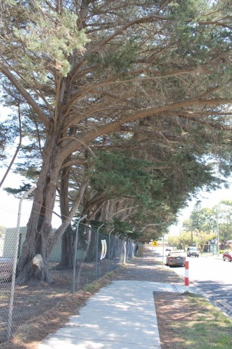 Council+will+remove+dangerous+overhanging+limbs+from+trees+at++Inverloch+Recreation+Reserve