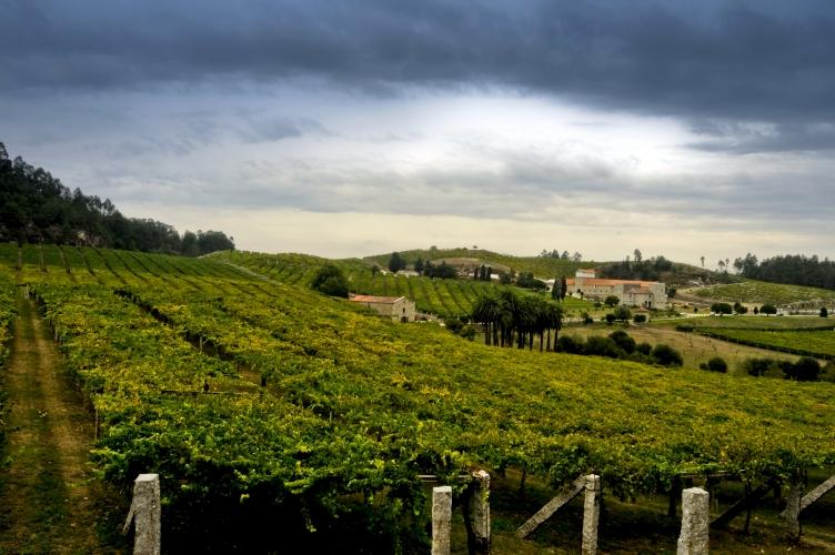 Albari%26ntilde%3Bo+wine+routes+-+Galicia+