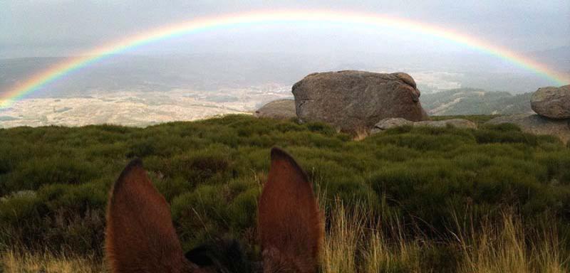 Equiberia+Rainbow