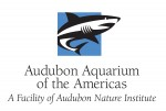 Rich Toth, Audubon Aquarium's Managing Director.