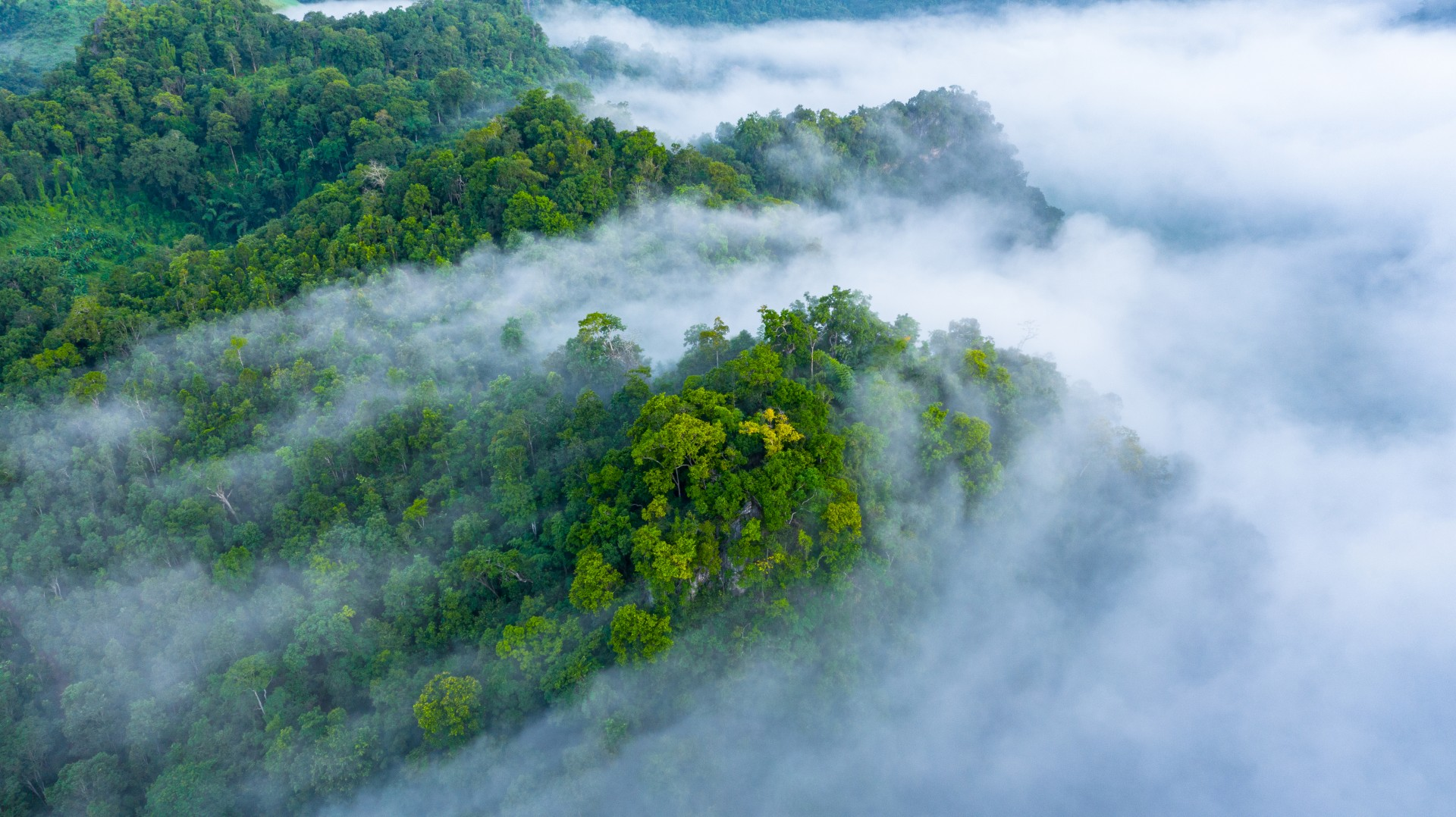 Forêts_Aerial view of morning mist at tropical rainforest mountain, background of forest and mist