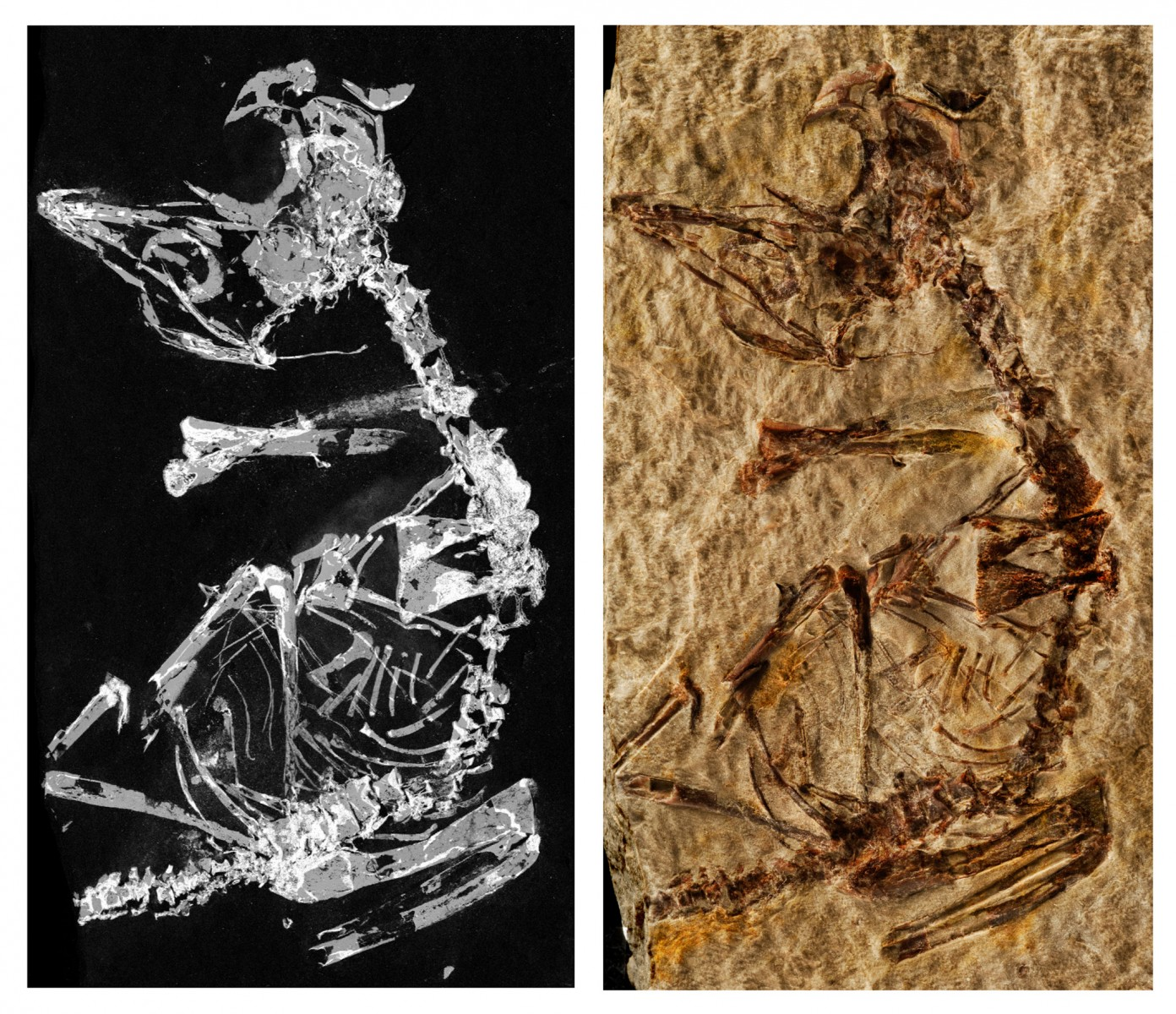 Phosphorous mapping and photo of fossil