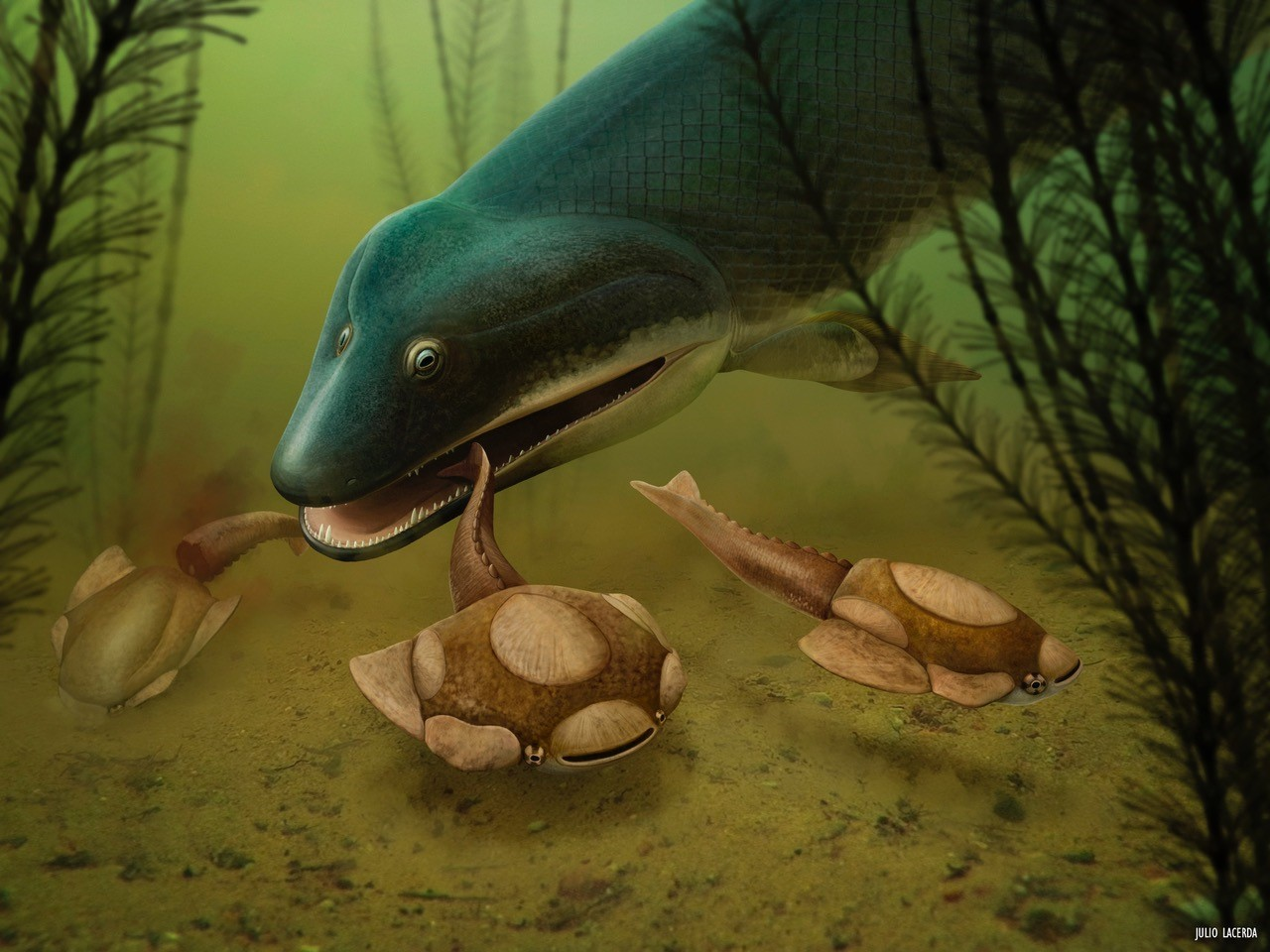 Predation of heterostracans by Panderichthys in a Devonian ocean. Artwork by Julio Lacerda