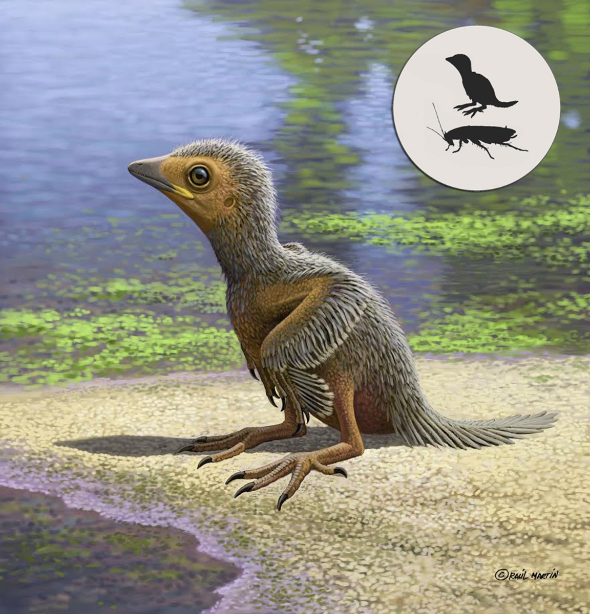 Artist impression of Enantiornithes