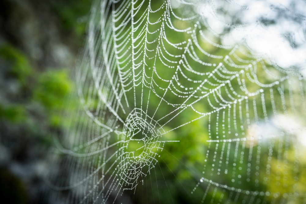 stock-photo-spider-net-on-tree-branch-1522719695.jpg