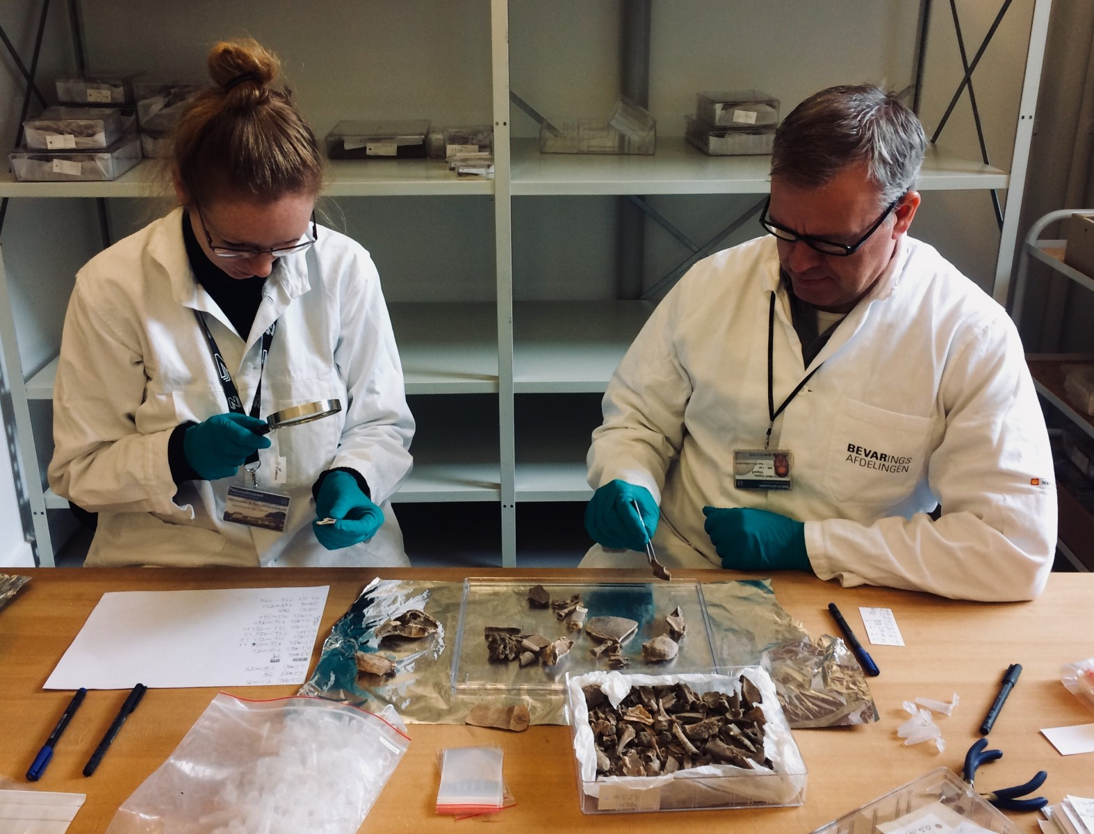 Virginia Harvey The University of Manchester and Casper Toftgaard The University of Copenhagen at The National Museum of Denmark selecting turtle bone samples excavated from the US Virgin Islands for collagen analysis