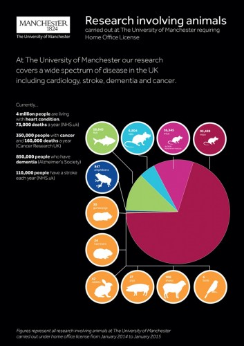 Animal research infographic