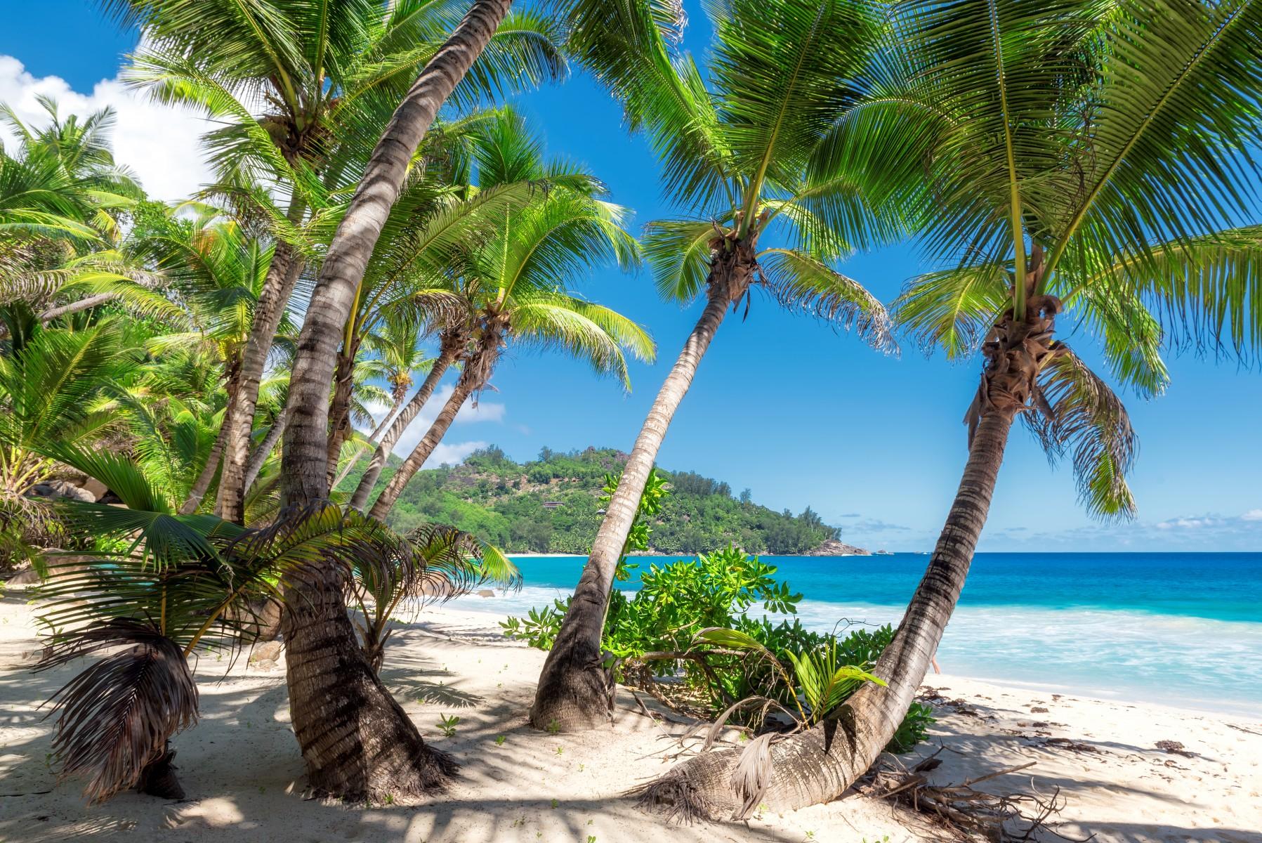 Paradise Island  Help