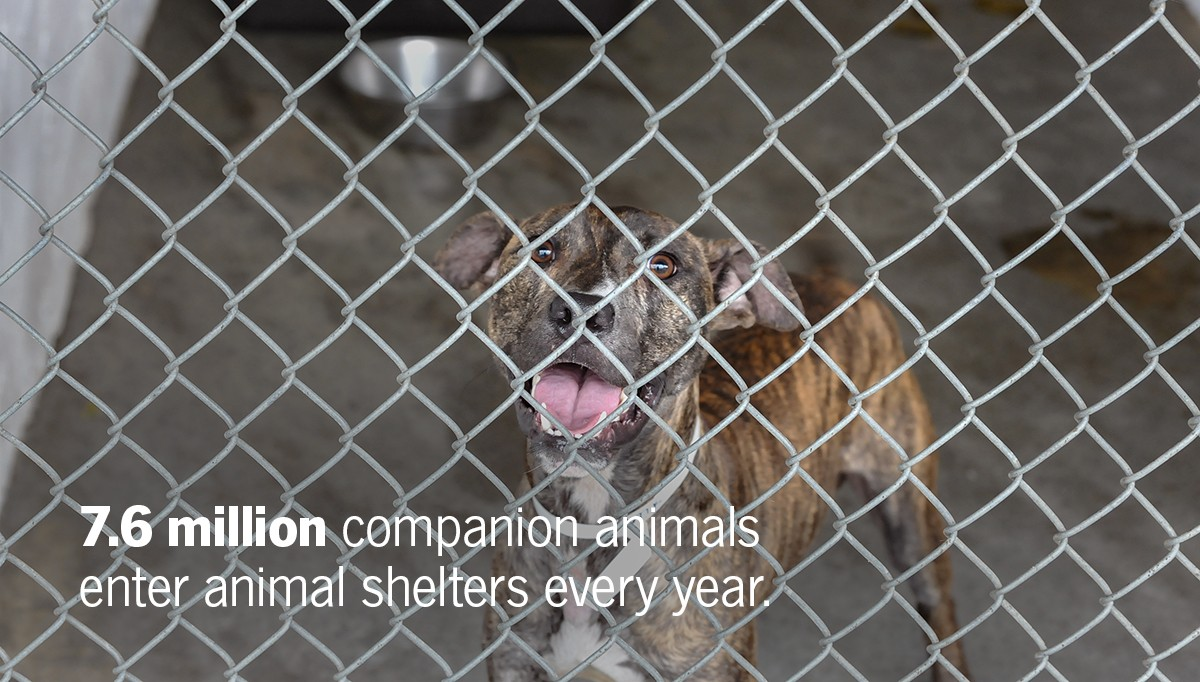 7.6 million companion animals enter animal shelters every year.