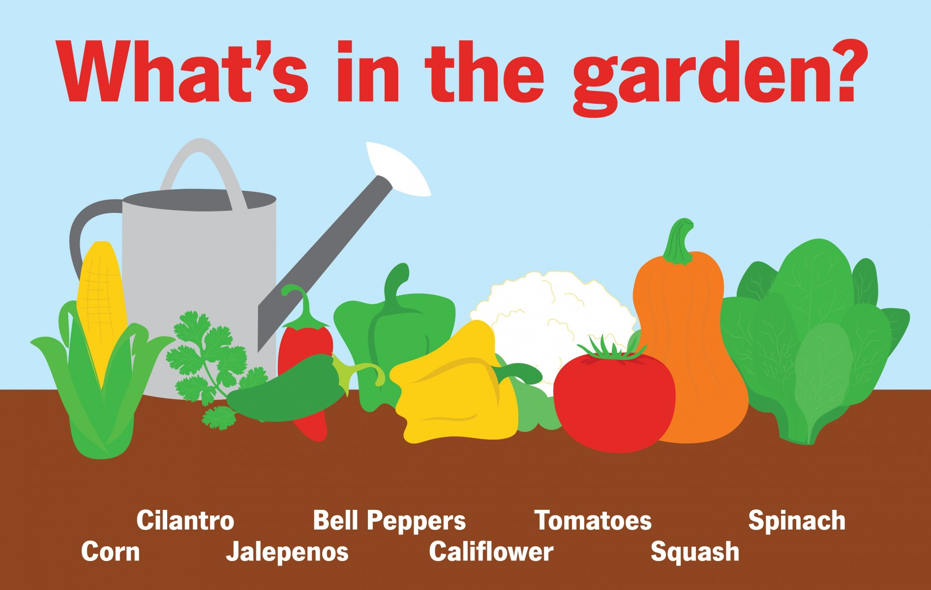 Lots of vegetables are in the garden!