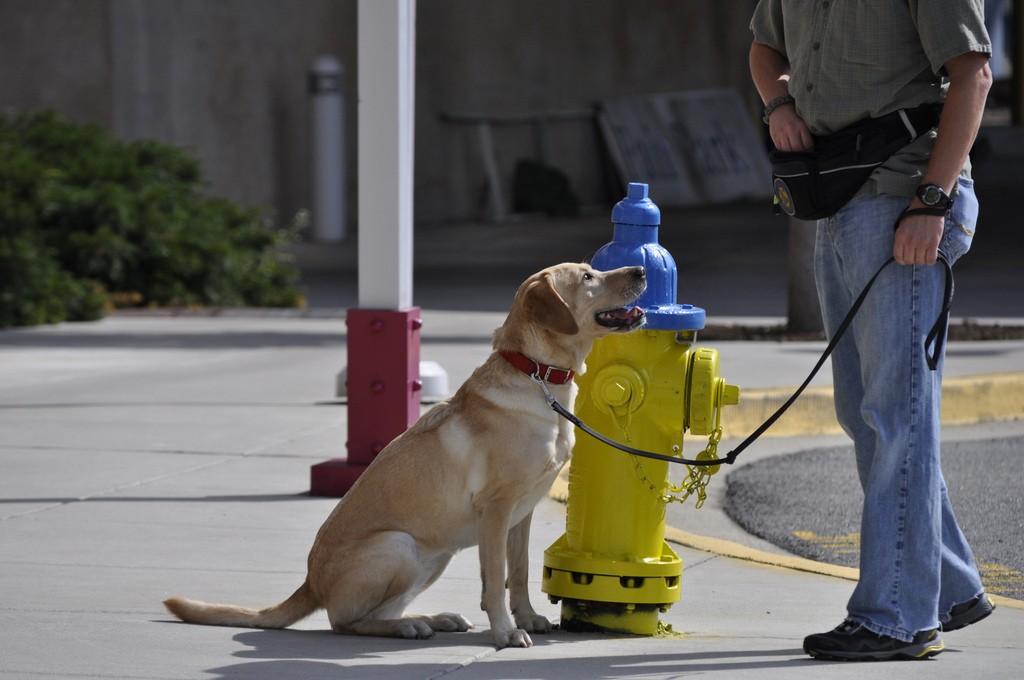 Hero Arson Dog Goes Rogue