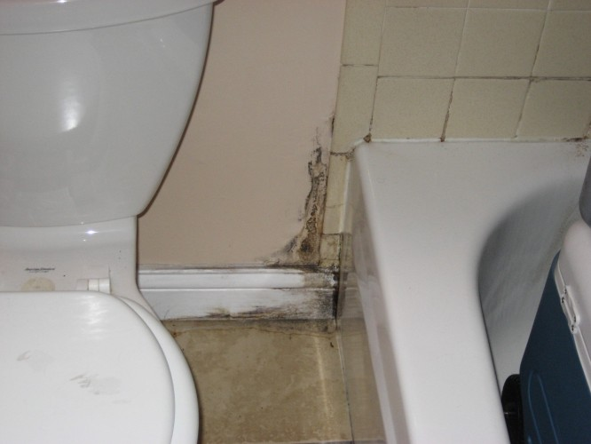 mold-in-bathroom.jpg