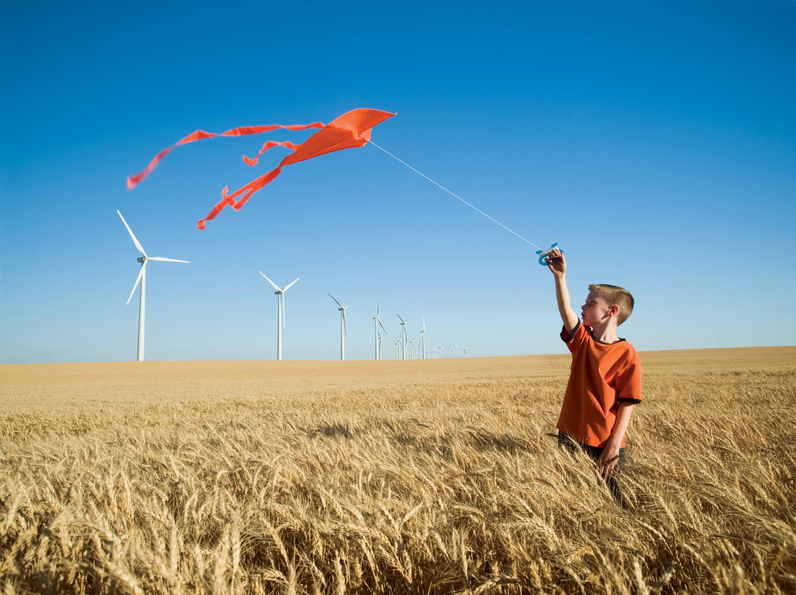 Young_boy_with_kite_in_corn_field_with_wind_turbines_rgb