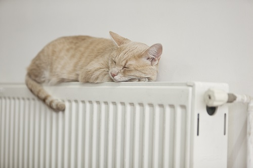 cat-on-radiator-x2