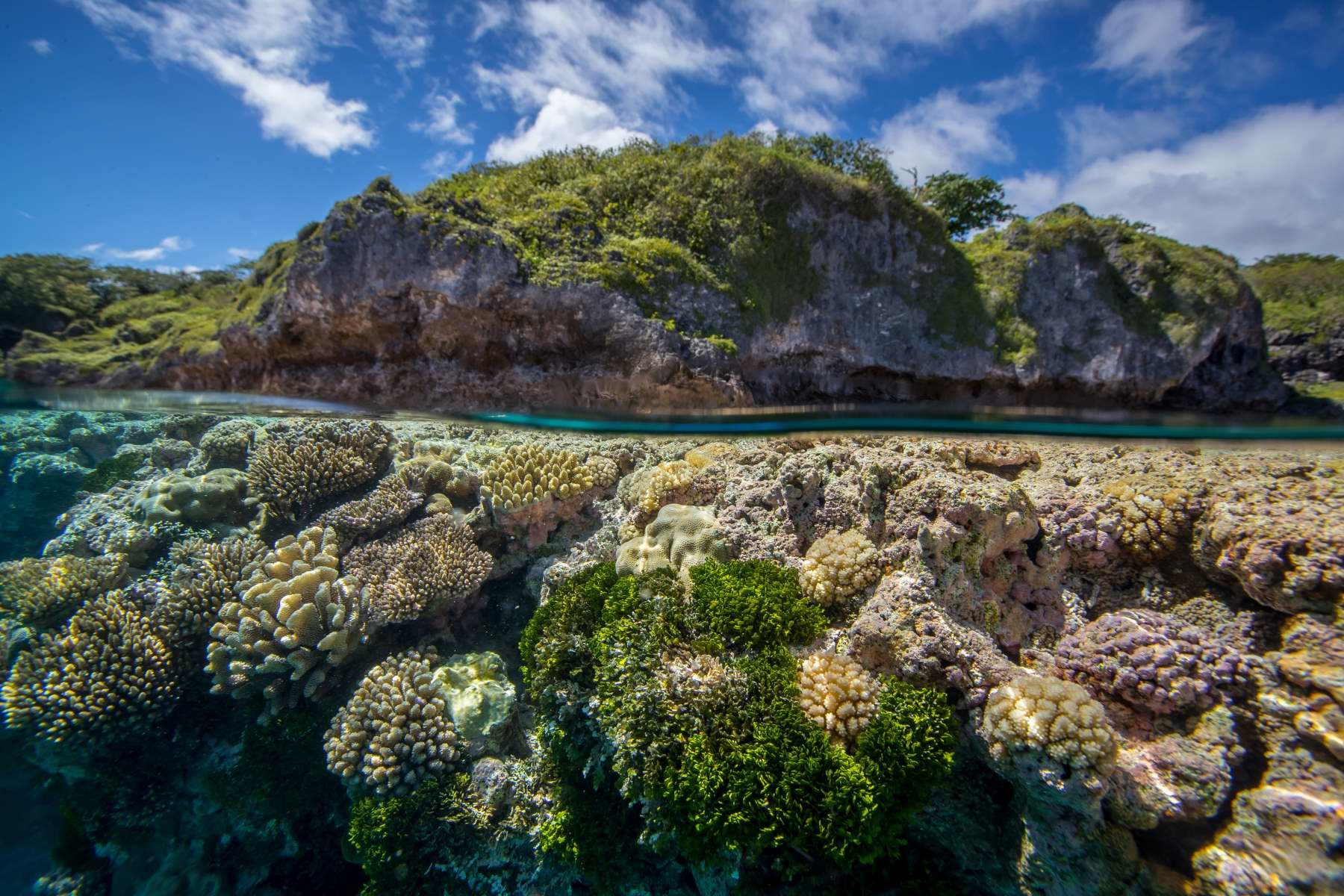 O​​ne of the largest raised coral atolls on the planet, Niue is intrinsically tied to its surrounding reefs.