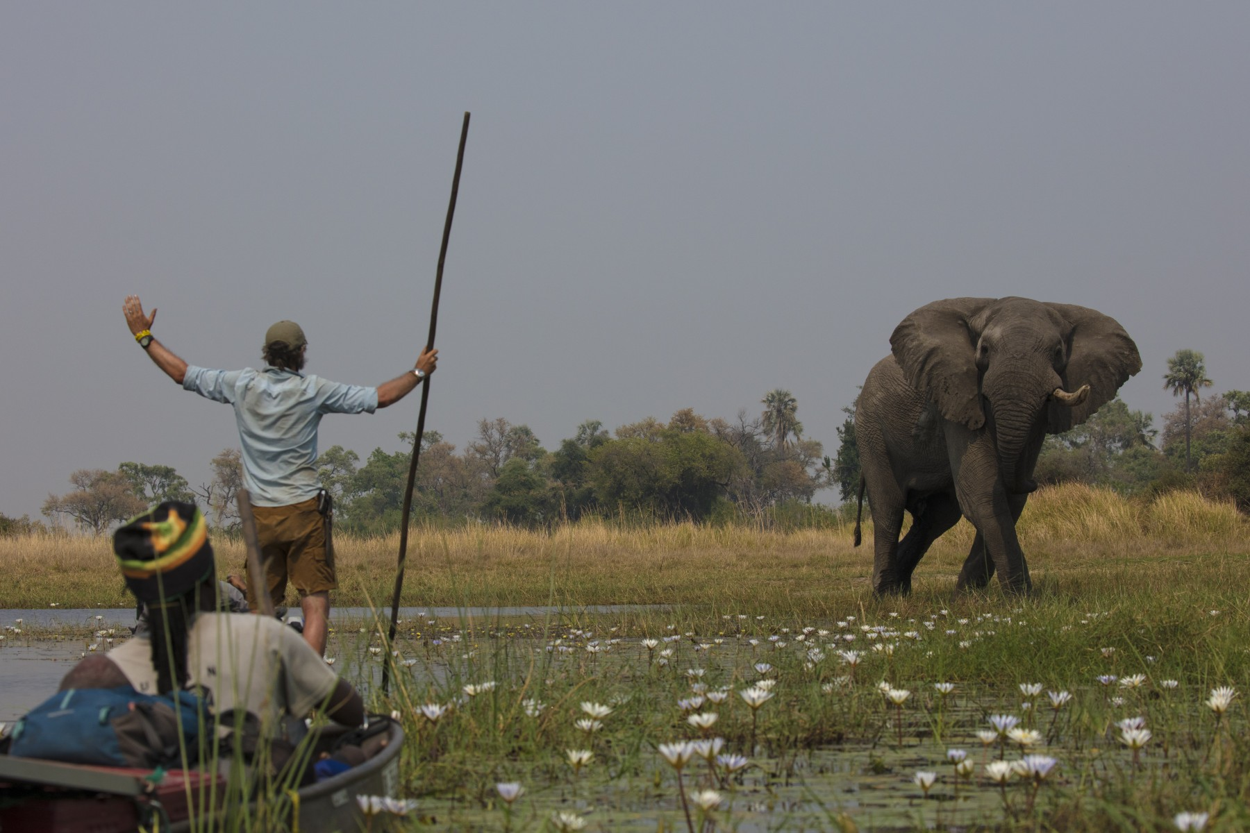 National Geographic Okavango Wilderness Project Leader Steve Boyes interacting with an old bull elephant that did not notice the expedition approaching in the Okavango Delta, Botswana.