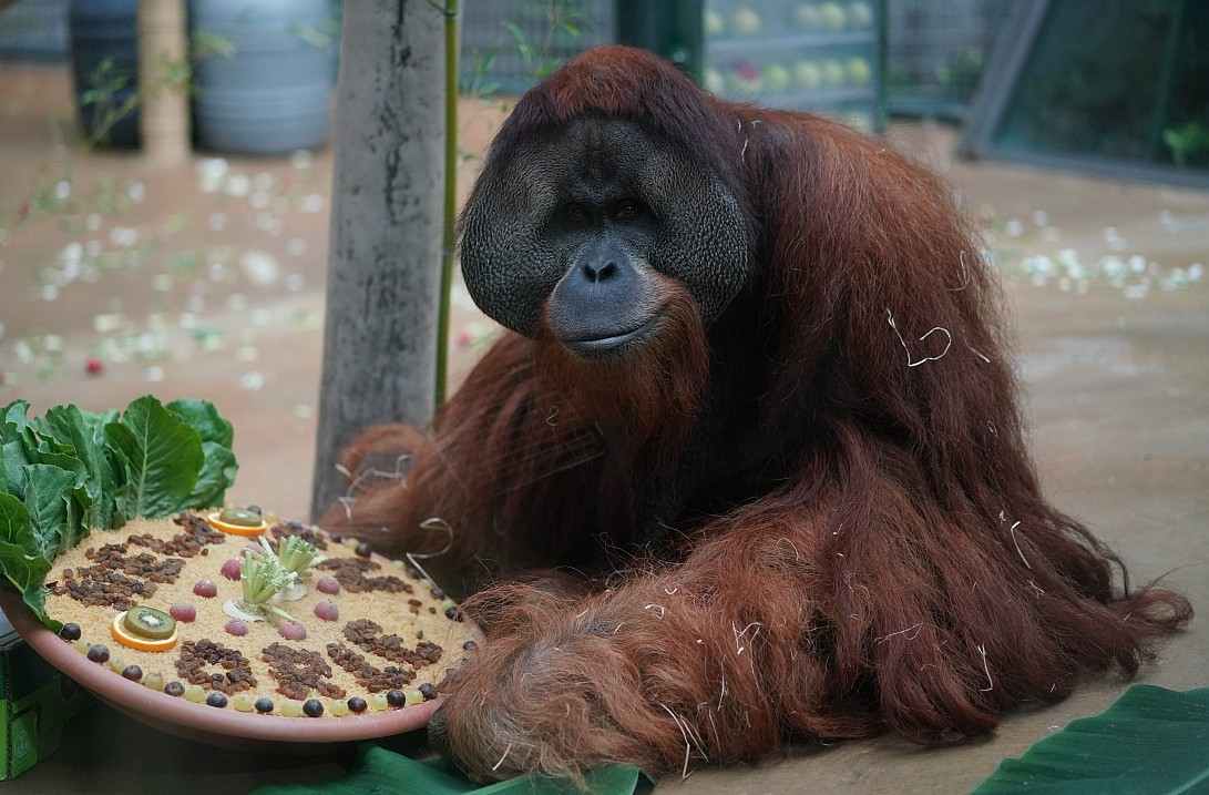 Jambi enjoying his farewell treat