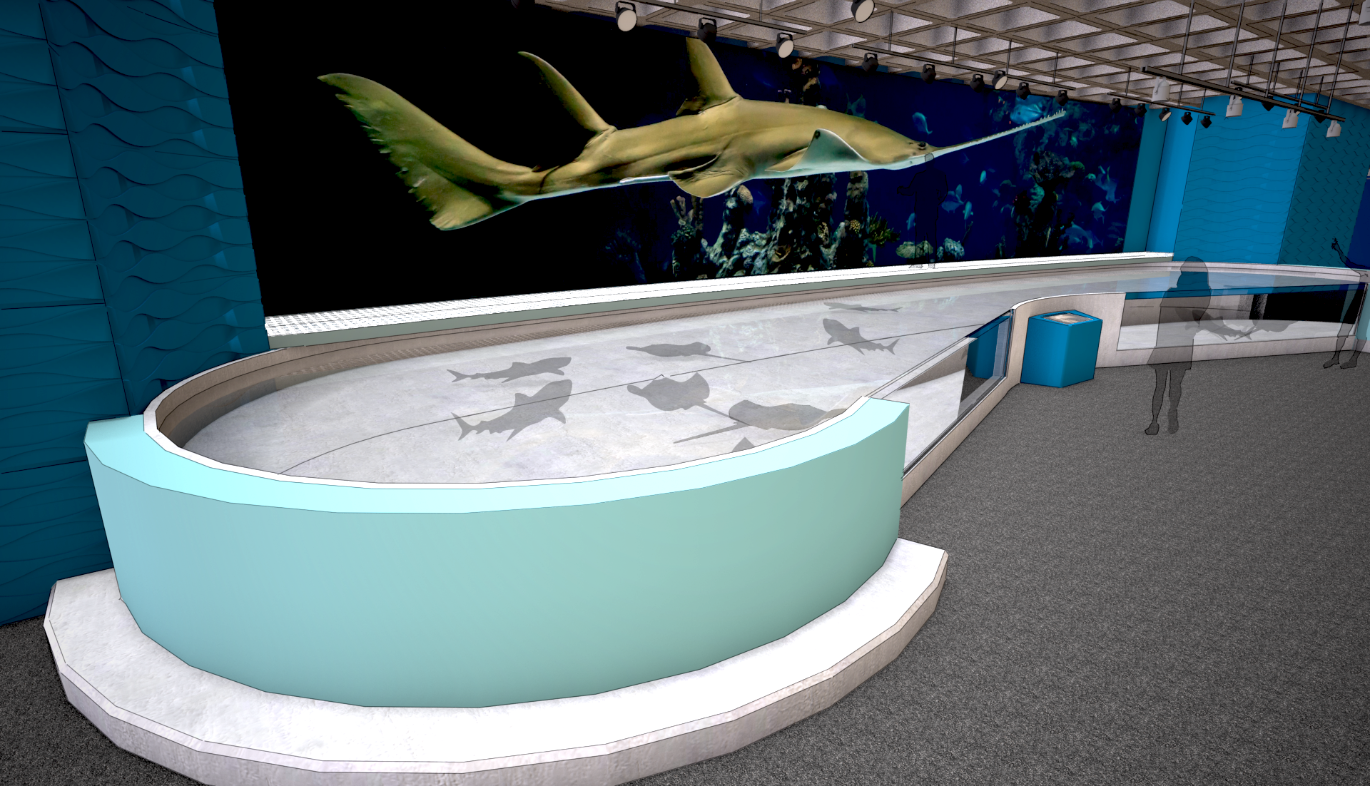 Shark and Ray Touch Pool Gallery