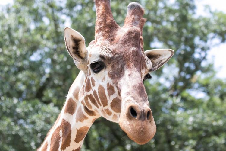 usa today names audubon zoo and audubon aquarium among the 10 best