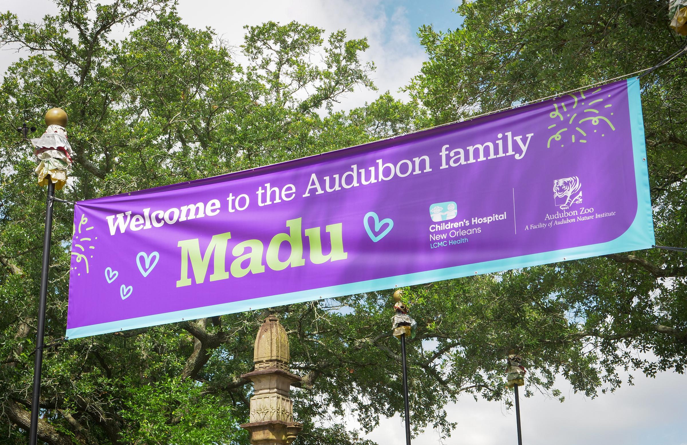 Patients at Children's Hospital New Orleans Name Audubon Zoo's Infant Orangutan