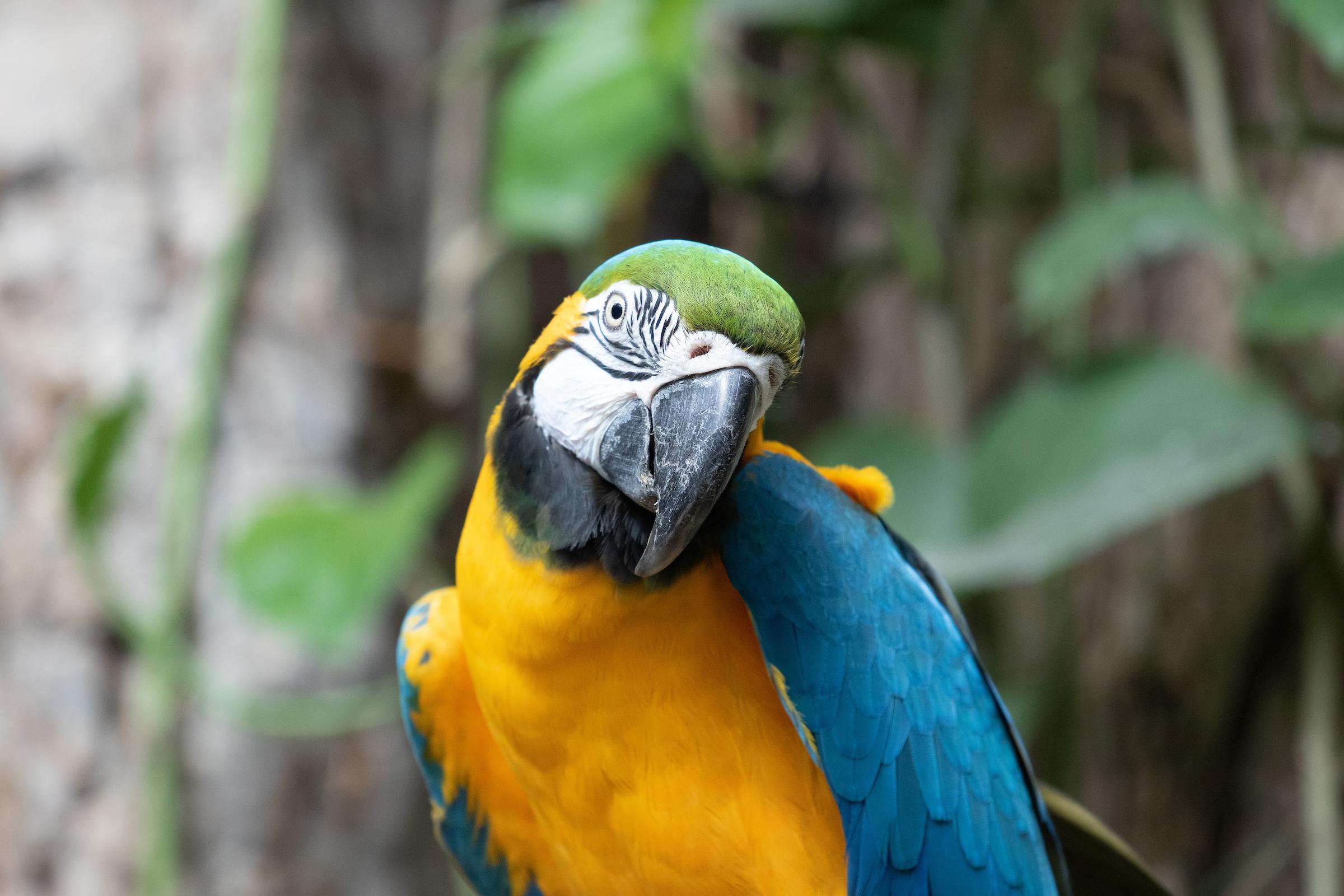 Audubon Aquarium and Audubon Zoo Nominated for USA TODAY 10Best Readers' Choice Awards