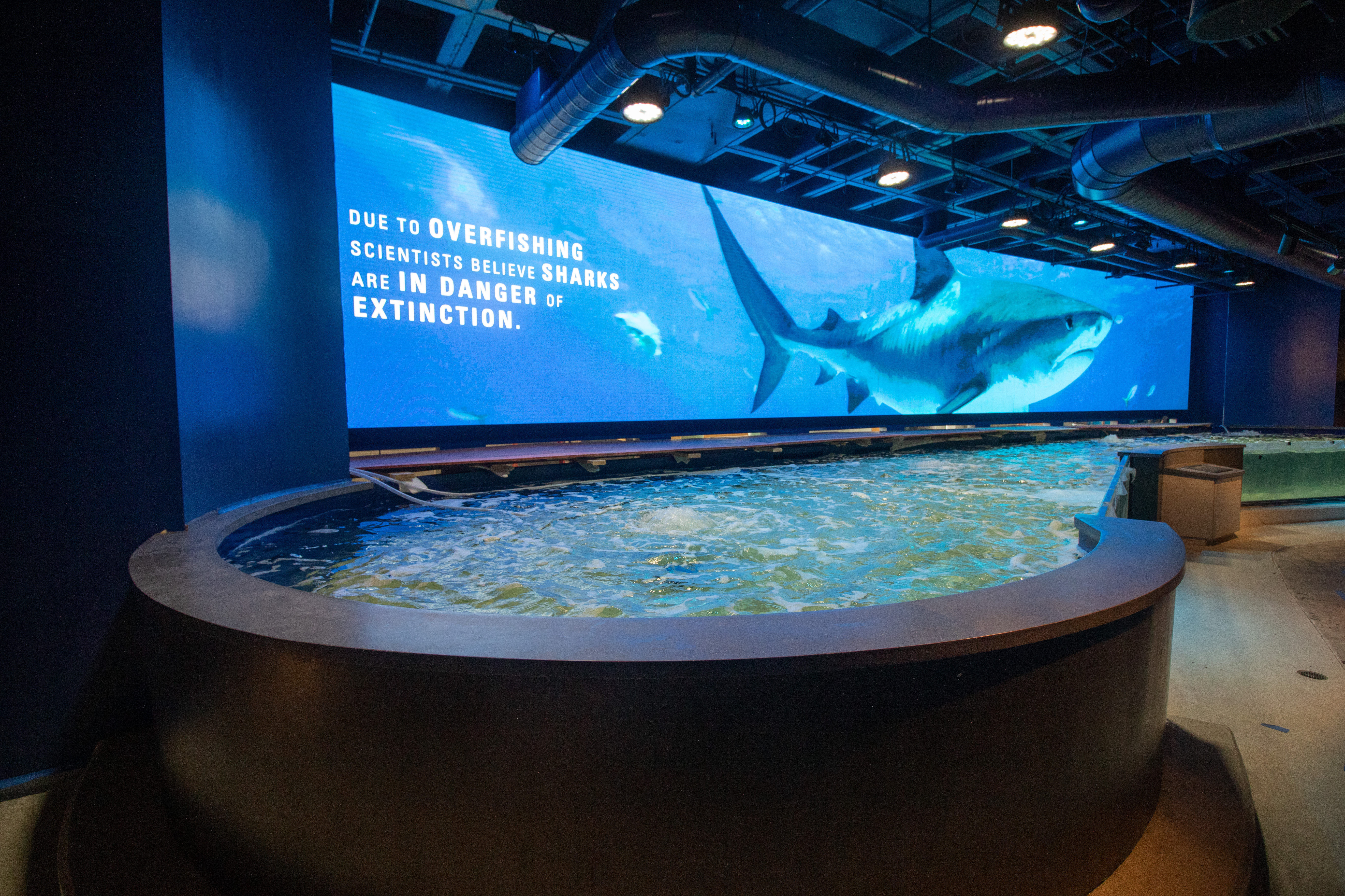 Shark Discovery Opens at Audubon Aquarium of the Americas