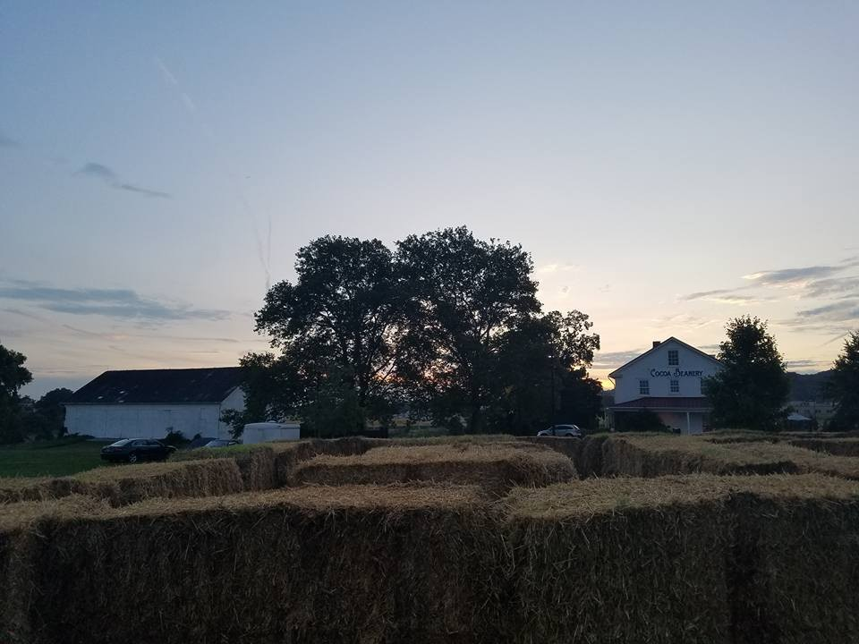 Enjoy a straw maze at the Beanery!