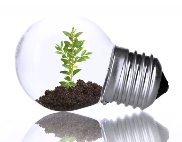stock-photo-green-eco-energy-concept-plant-growing-inside-light-bulb-isolated-on-white-172666370.jpg