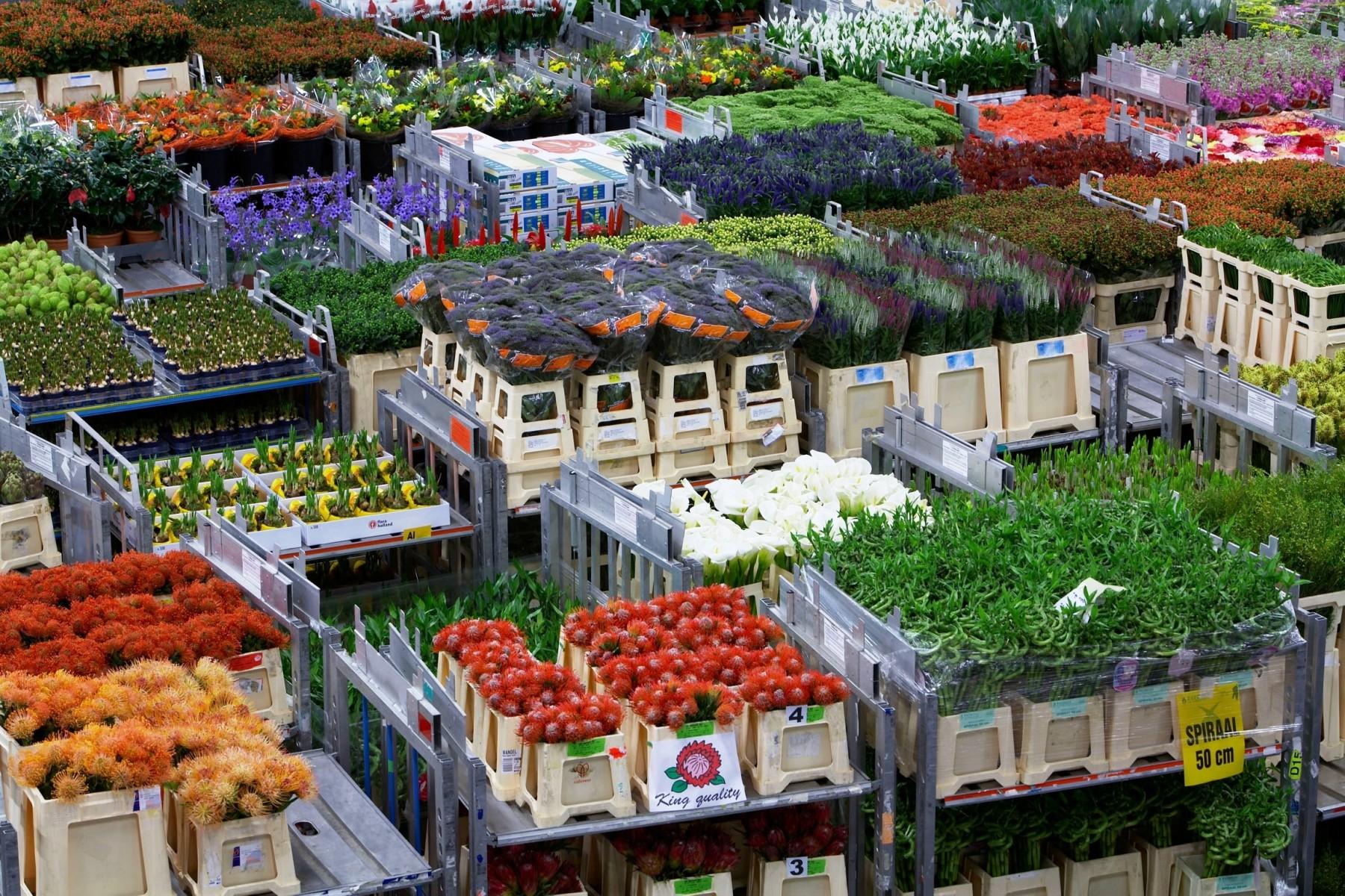 Заказ цветов из голландии с аукциона