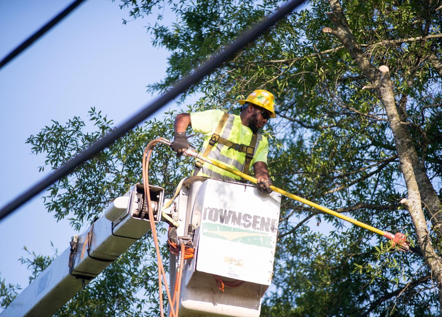 Jackson Emc S Tree Maintenance Program