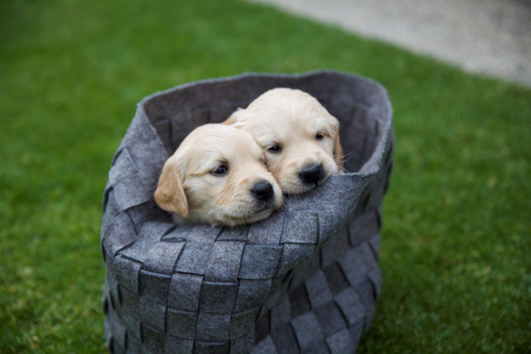 Puppies in a bag
