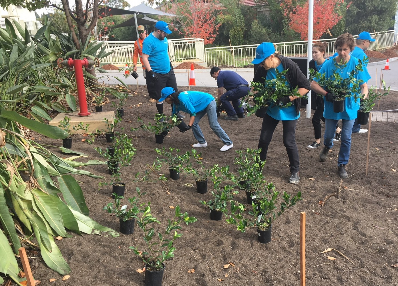 Risk Team Helping Planting In The Gardens at Bupa Clayton Aged Care Home
