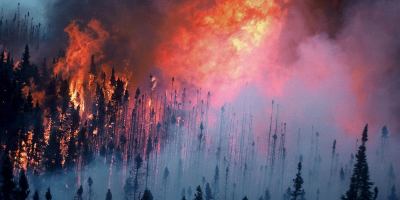 The world's wildfires annually burn an area of forest equivalent to the size of India.