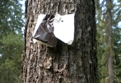Pine beetle traps that combined two tree chemicals and a pheromone bait were up to 82 per cent more effective than standard baits.