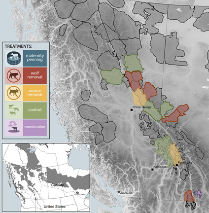 This map shows the distribution of woodland caribou in the Canadian Rockies, as well as the various population management treatments used over the past 25 years. (Courtesy of AMBI and Fuse Consulting.)