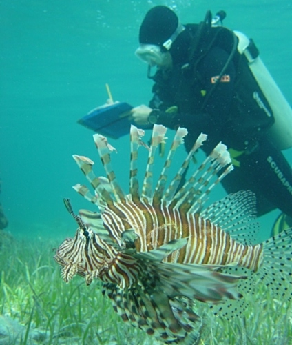 U of A marine biologist Stephanie Green records observations about a lionfish. Green's research yielded a systematic way of analyzing behavioural traits that could improve understanding of how marine predators select their prey. (Photo courtesy of Stephanie Green)