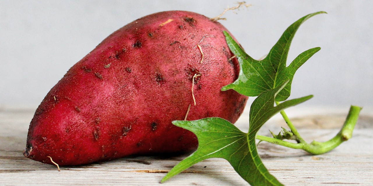 Local gardeners can experiment a bit more this summer because of the overall warming trend, and try to grow plants that haven't been hardy enough for our climate, like this sweet potato.