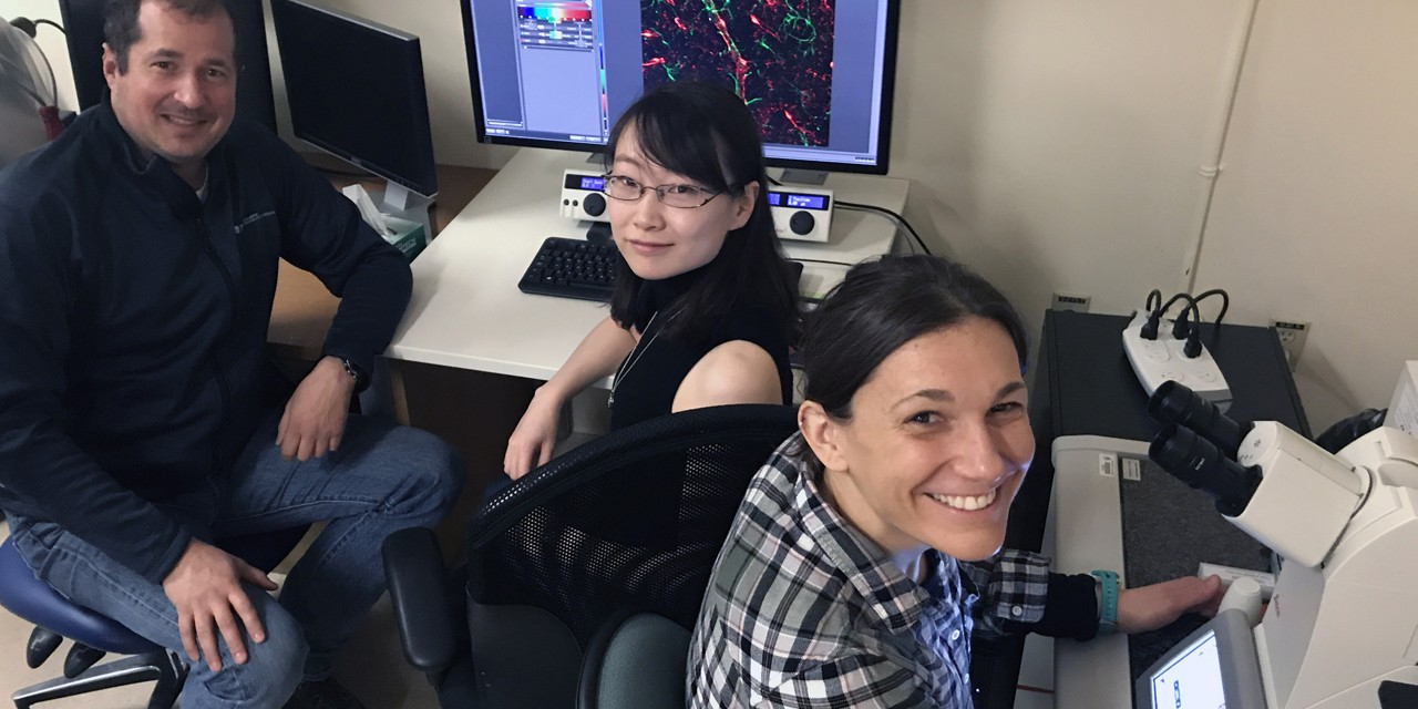 Karim Fouad and post-doctoral fellows Yaqing Li (centre) and Ana M. Lucas-Osma were part of a team whose latest research could alter how we view spinal cord function and rehabilitation after spinal cord injuries. (University of Alberta)